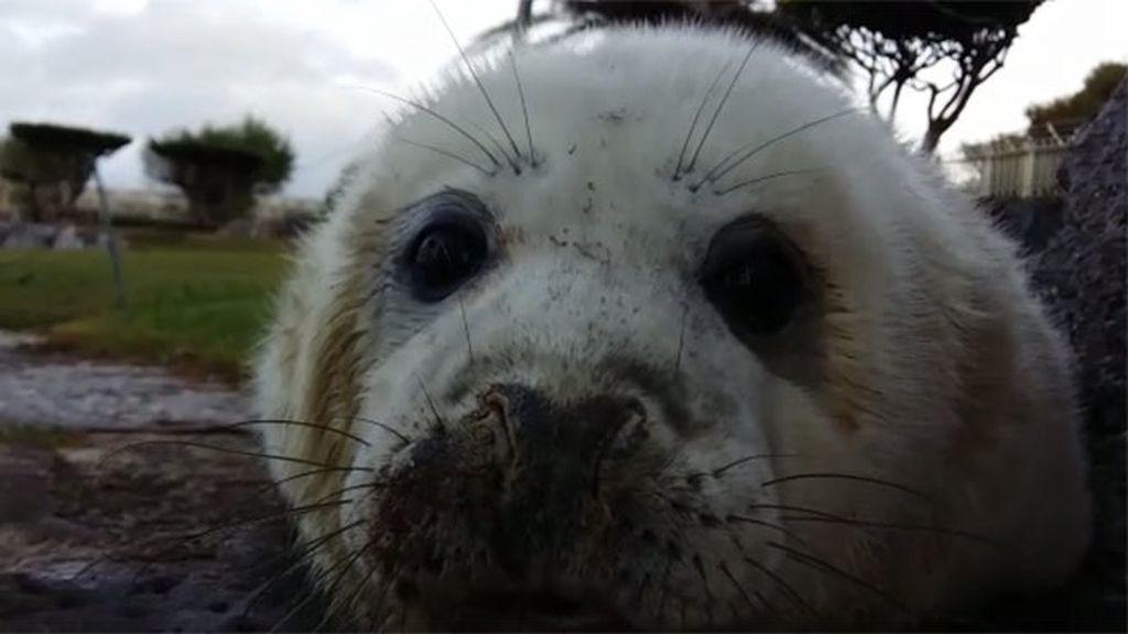 video 1 foca