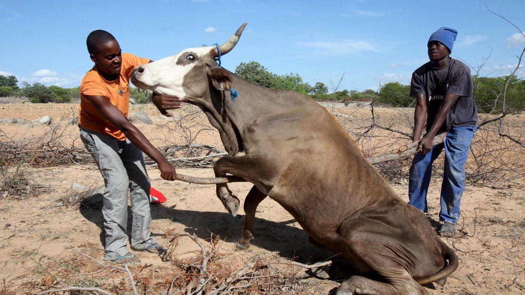animales africanos 2