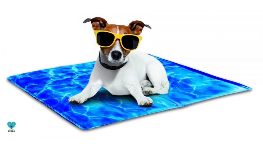 Tu perro no volverá a pasar calor con esta 'toalla'