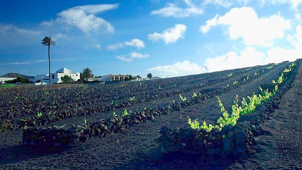Los increíbles vinos volcánicos de La Geria (Lanzarote)