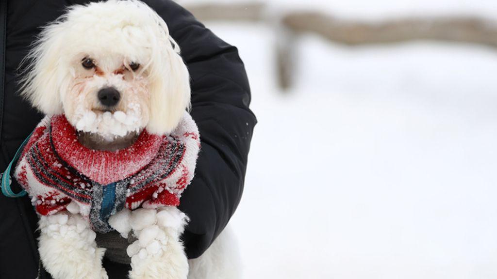 perro frío