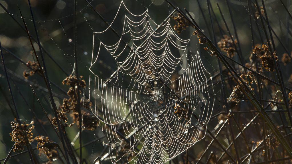 """""""Si las arañas están trabajadoras, lluvia ni gota"""""""
