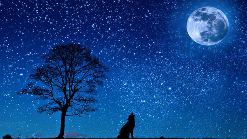 Nictofilia, para los que se convierten en lobezno a la luz de la luna llena