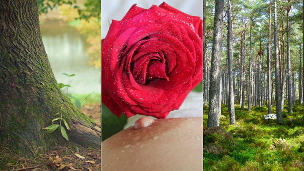 La Dendrofilia, atracción por los árboles y las plantas