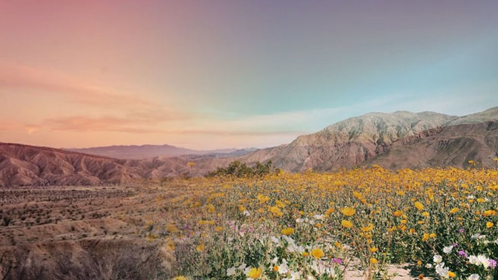 Campo de flores contraste