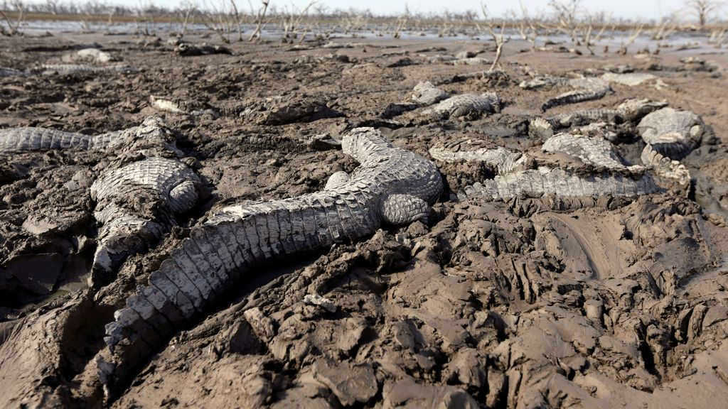 La sequía en julio del río Pilcomayo (Paraguay), la peor en 20 años, causada por un fallo humano