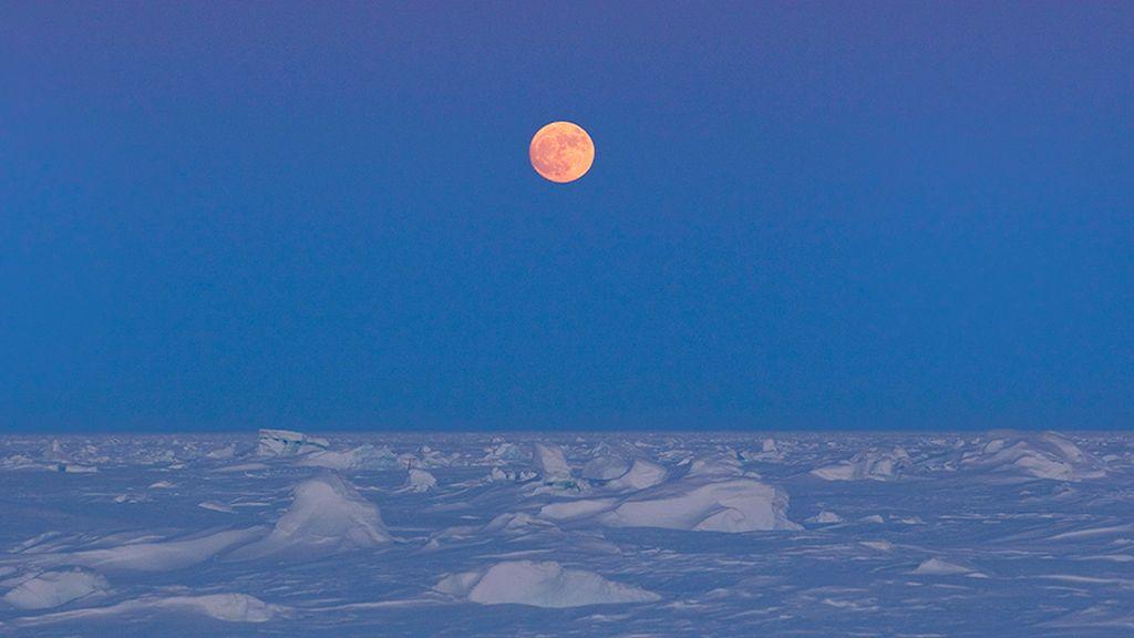 Luna Nieve 2