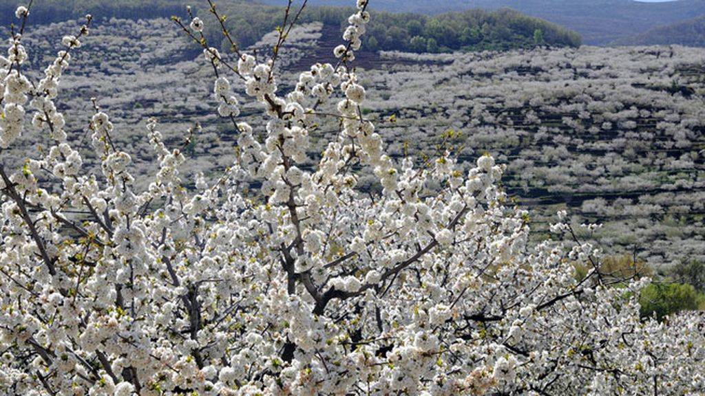 primavera en marzo