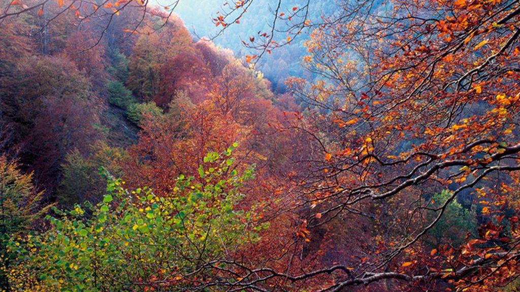 Fotografías inolvidables en la Reserva Natural Protegida de Saja-Nansa (Cantabria)