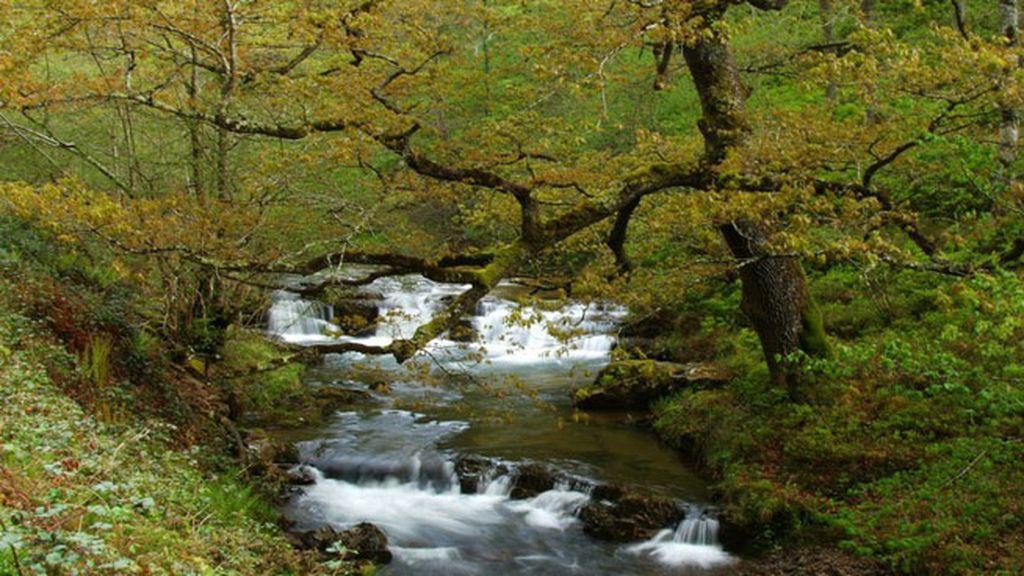 Parque Natural de Saja Besaya en Cantabria