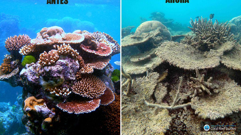 barrera de coral antes/ahora