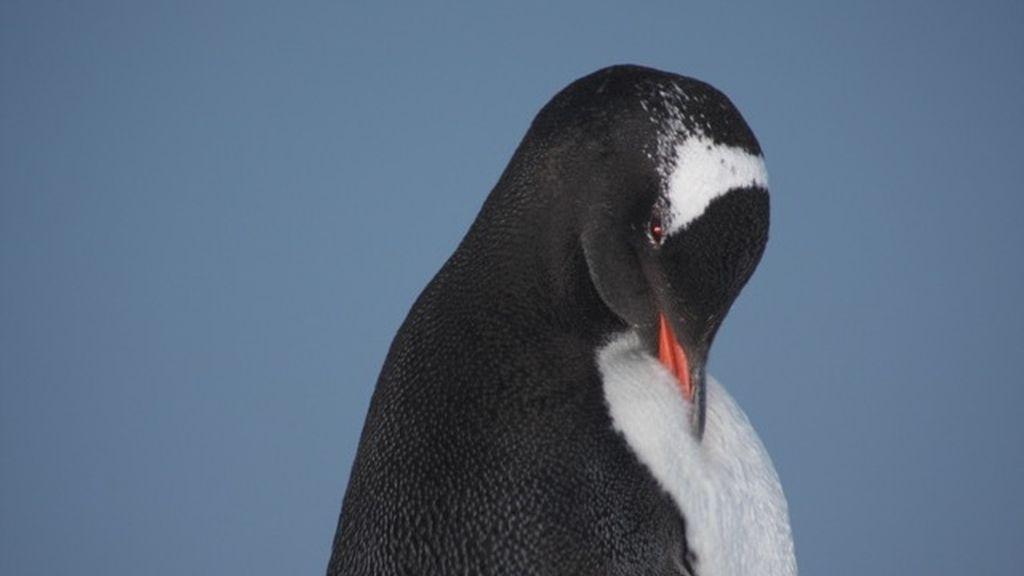 Pingüinos 2