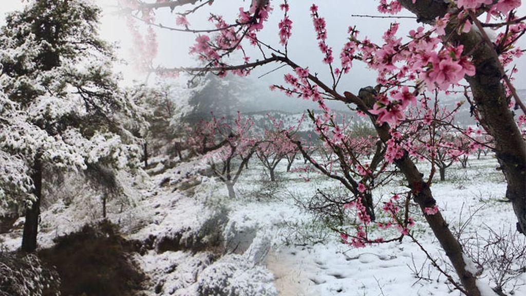nieve en redes