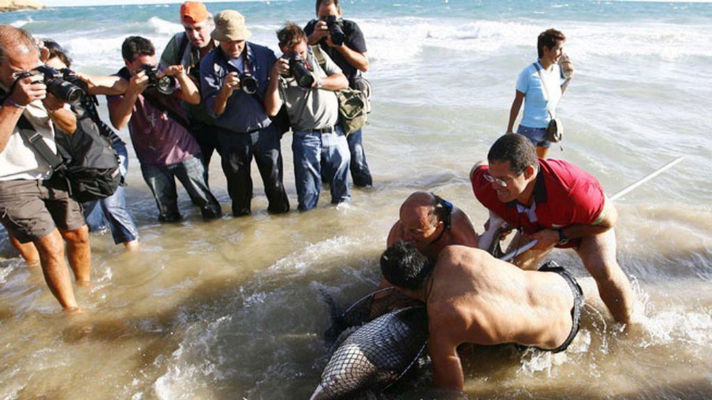 Los tiburones, ¿de paso por las costas españolas?