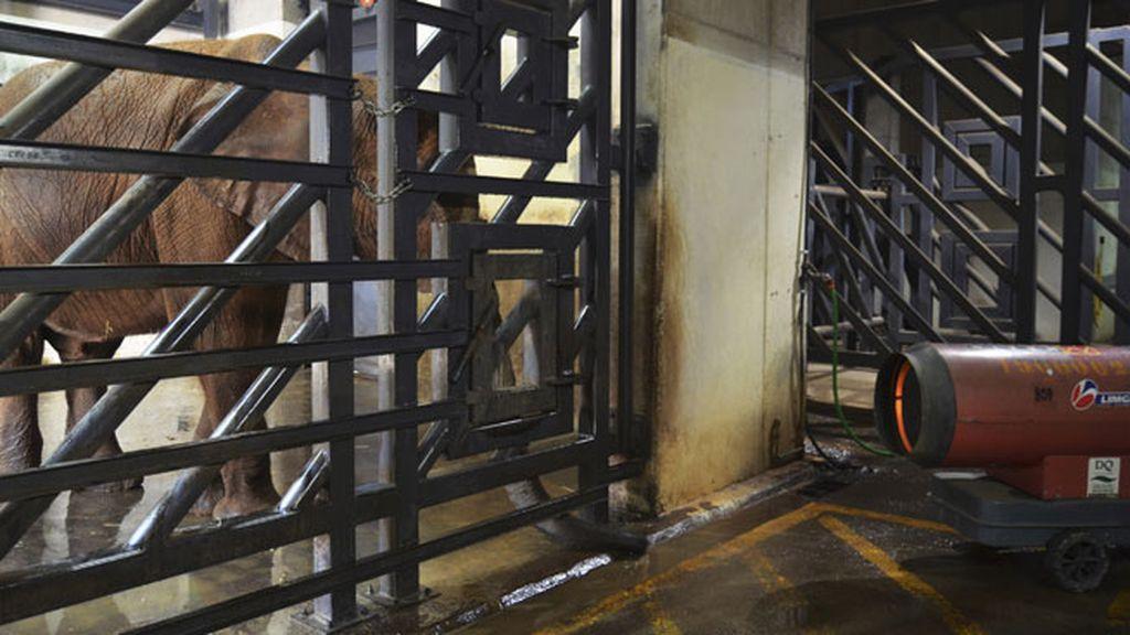 Valencia congelada con la ola de frío: así cuidan a sus animales en el centro BIOPARC