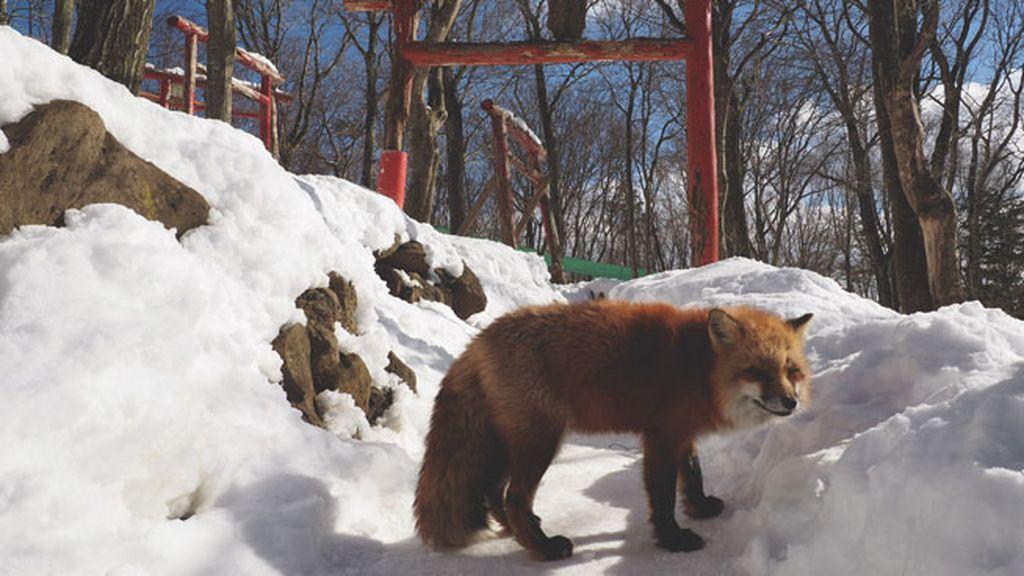 Esta reserva natural acoge más de 100 ejemplares de seis especies diferentes
