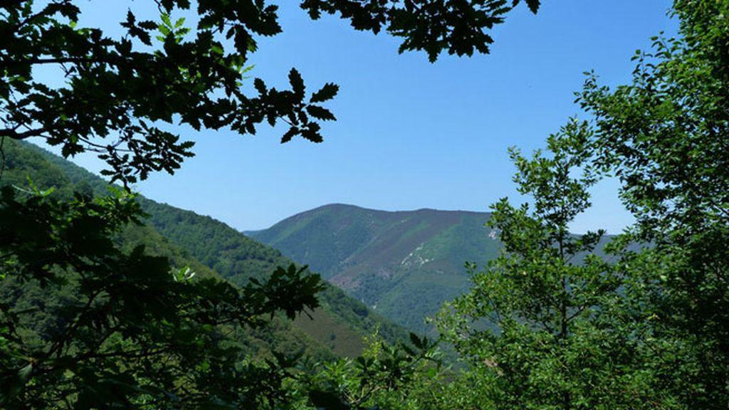 Bosque de Moal de Cangas de Narcea en Asturias
