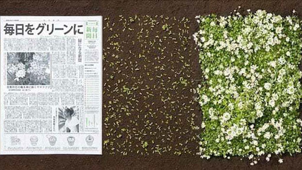 Un periódico, una flor.