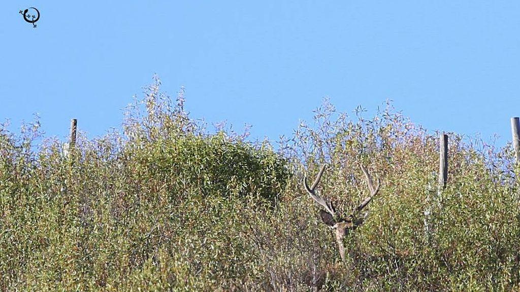 Berrea, frondosos bosques y el Río Tajo: Todo esto en el Parque Nacional de Monfragüe