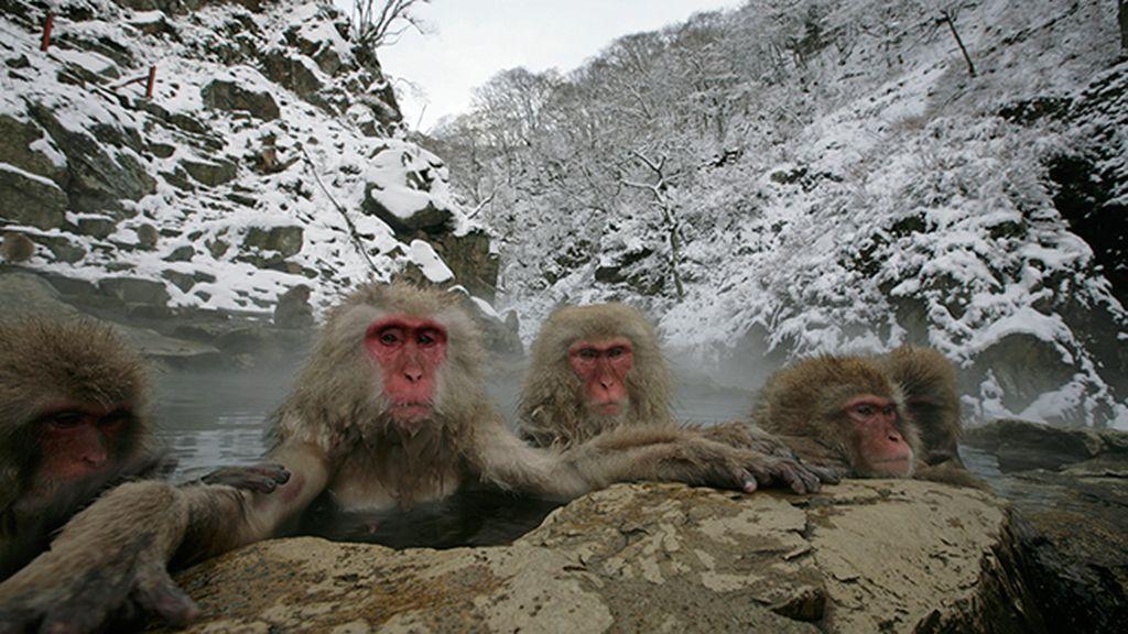 Huyen del frío bañándose en fuentes termales