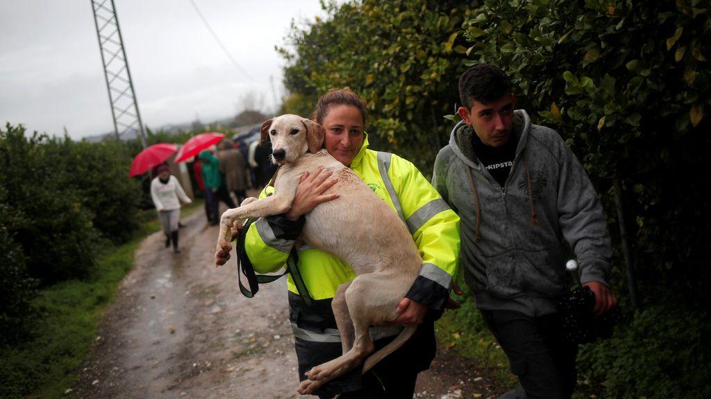 Los animales indefensos, los más vulnerables por las terribles inundaciones de Málaga en diciembre