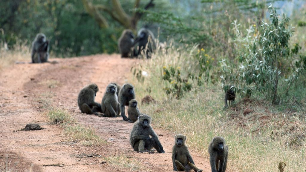 El hogar de grandes animales africanos