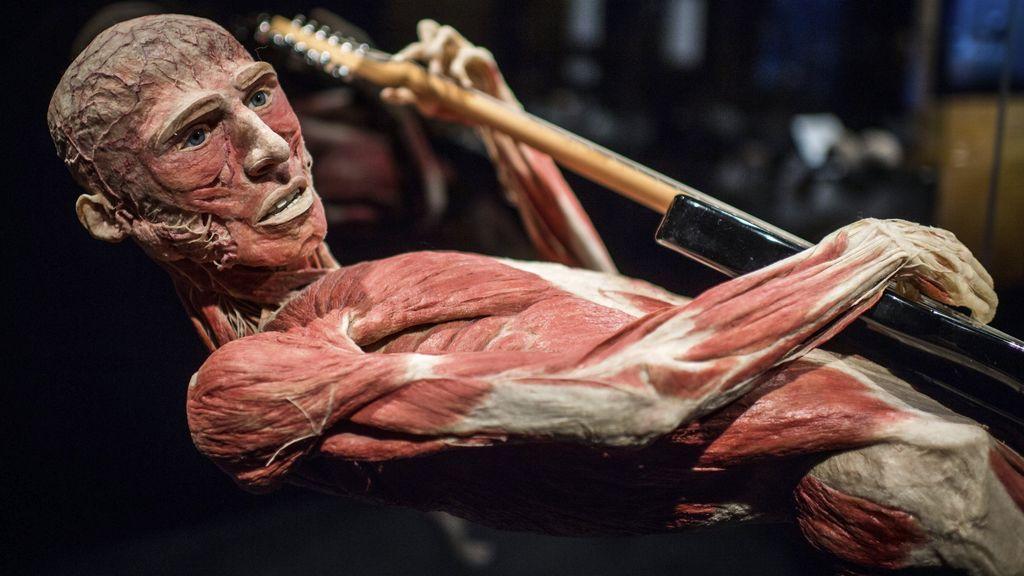 """""""El guitarrista"""": fotografía de un cuerpo humano """"plastinado"""""""