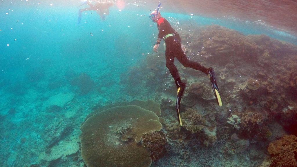 Buceo en la Gran Barrera de Coral de Queensland, Australia