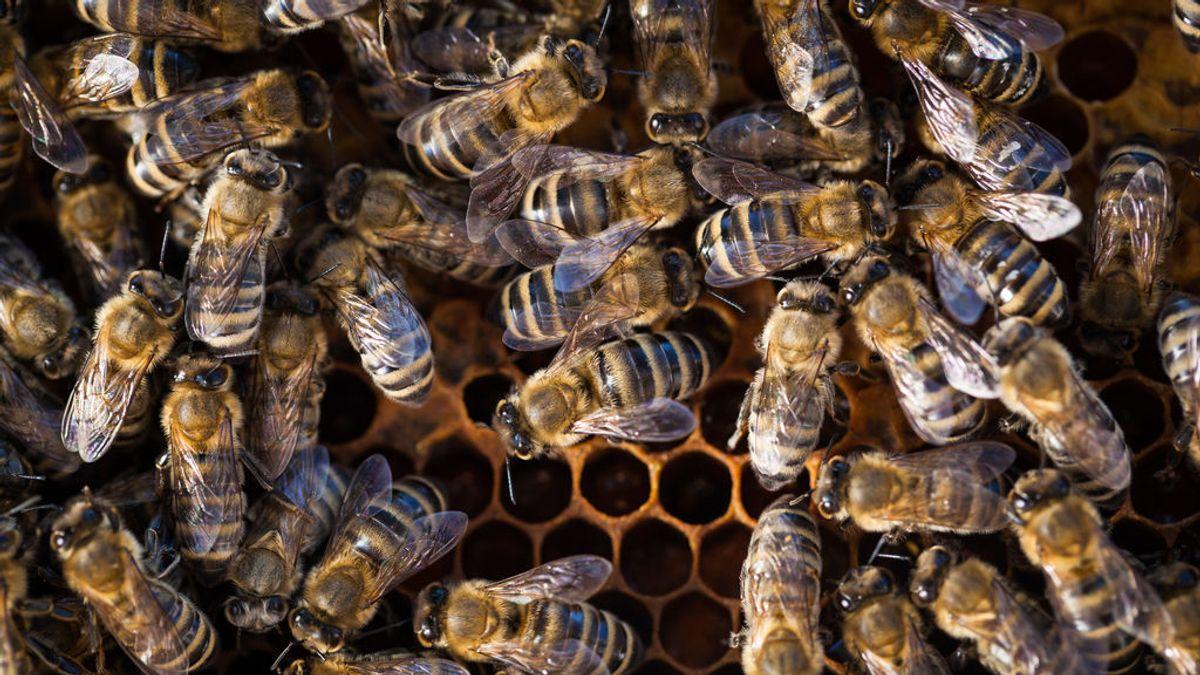 Fallece un hombre en Mijas (Málaga) tras sufrir picaduras masivas de abejas