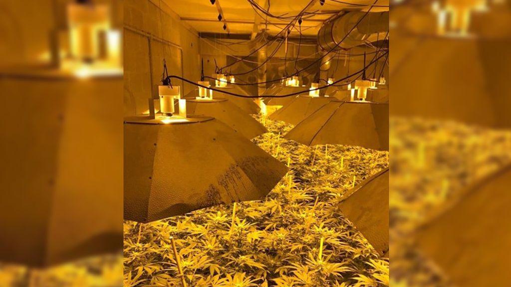 Descubren más de 4 mil plantas de cannabis en un búnker nuclear de Inglaterra