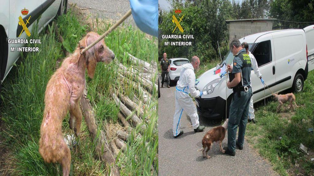 Detienen a un hombre de 42 años en Pontevedra por maltratar a 15 perros