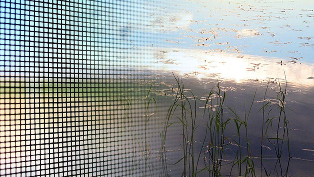 A falta de mosquitera: siete trucos para que los mosquitos no se hagan con tu casa