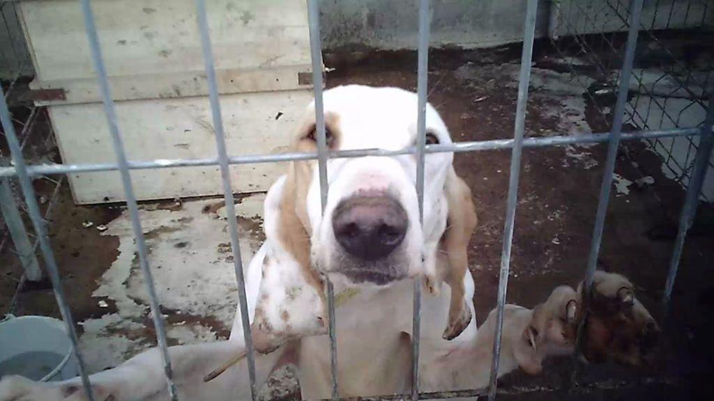 ¡Una perra con la matriz colgando!  El chaterrero intenta llevársela pero el dueño lo impide