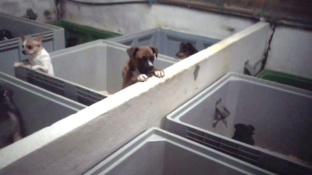 """La solución del dueño de un criadero: """"Si compras un cachorro y se muere, te damos otro"""""""