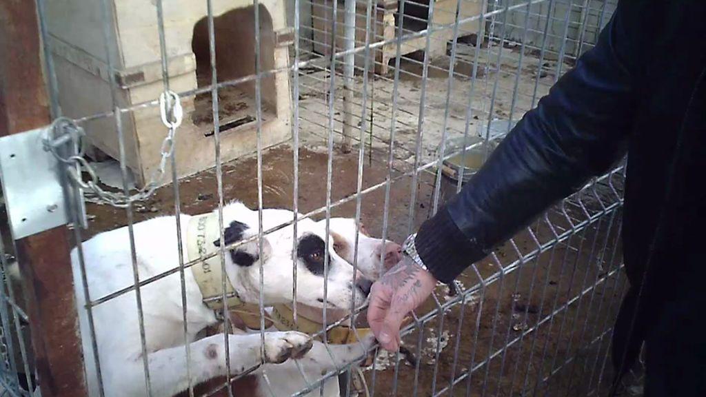 Javi encuentra una veintena de perros maltratados en la parte de atrás de una chatarrería