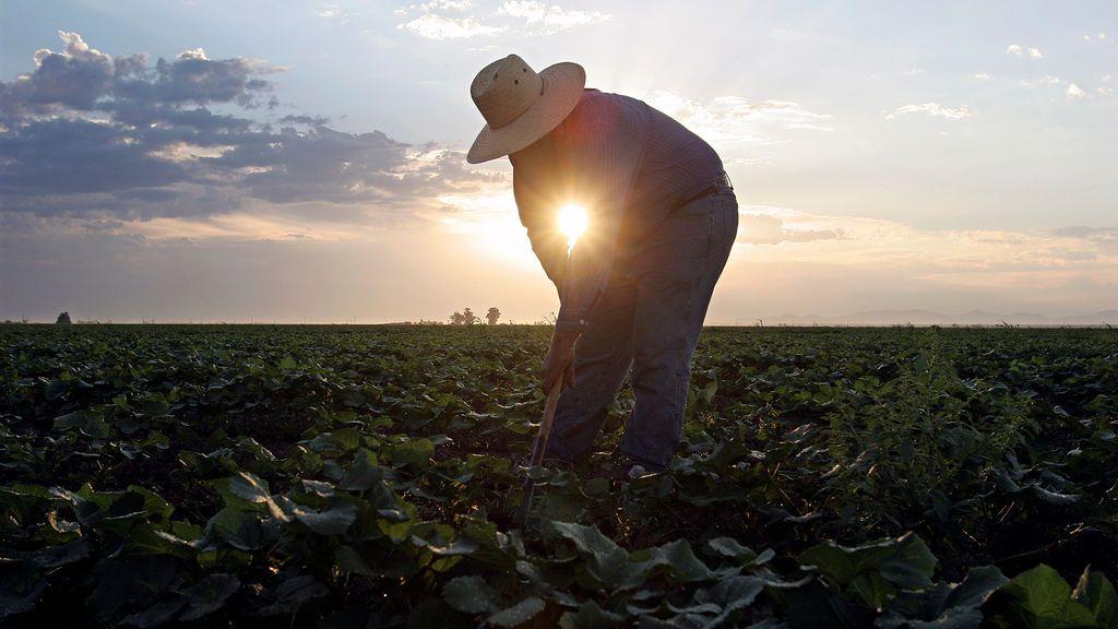 Un campo de melón durante la madrugada en Somerton, Arizona