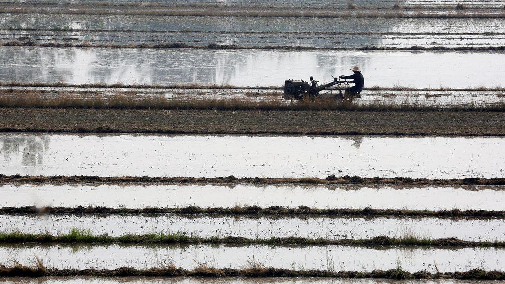 Trabajo en un campo de arroz
