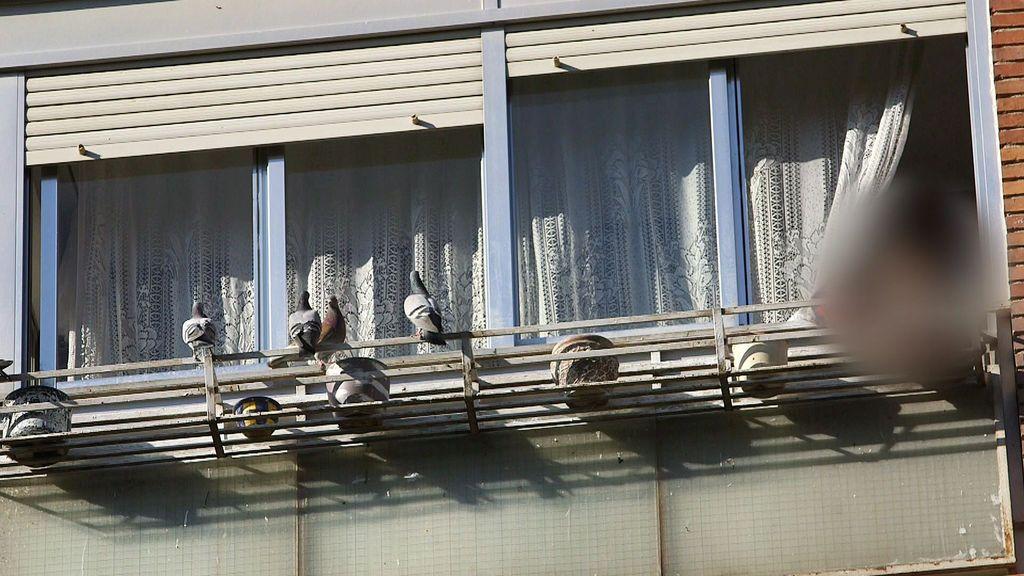 """Una vecina, causante de una plaga de palomas, a nuestra reportera: """"Tonta"""", """"idiota"""", """"mamarracha""""..."""