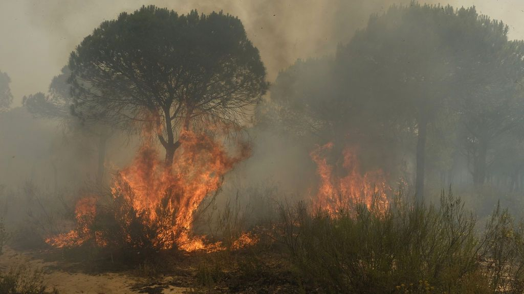 Virulentas llamas arrasan el término municipal de Moguer