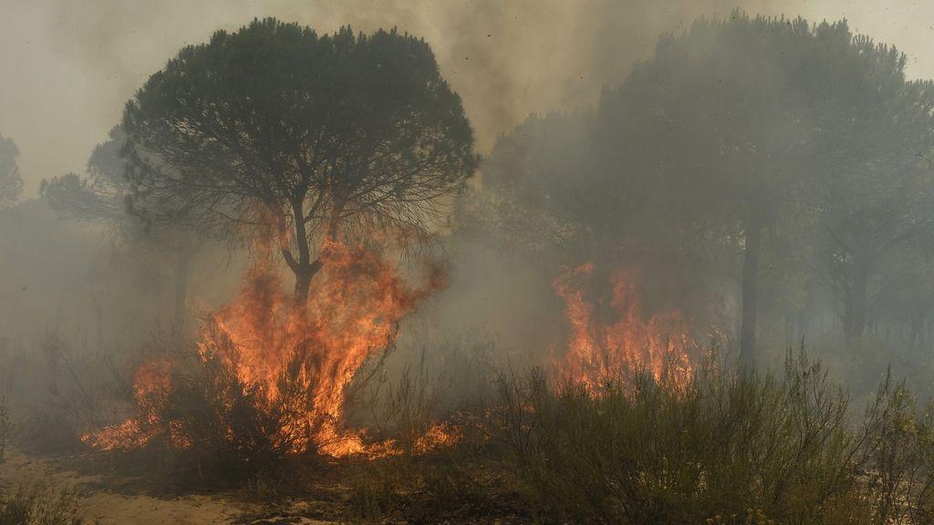 Las imágenes del incendio forestal en Moguer (Huelva)