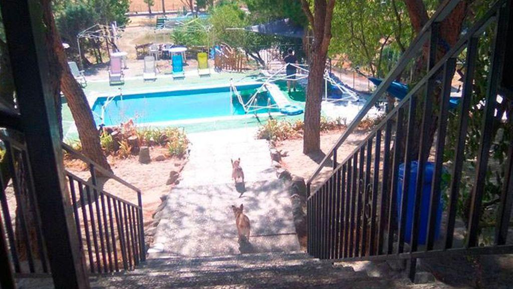 Peludos al agua, el centro de entrenamiento canino de Tres Cantos (Madrid)