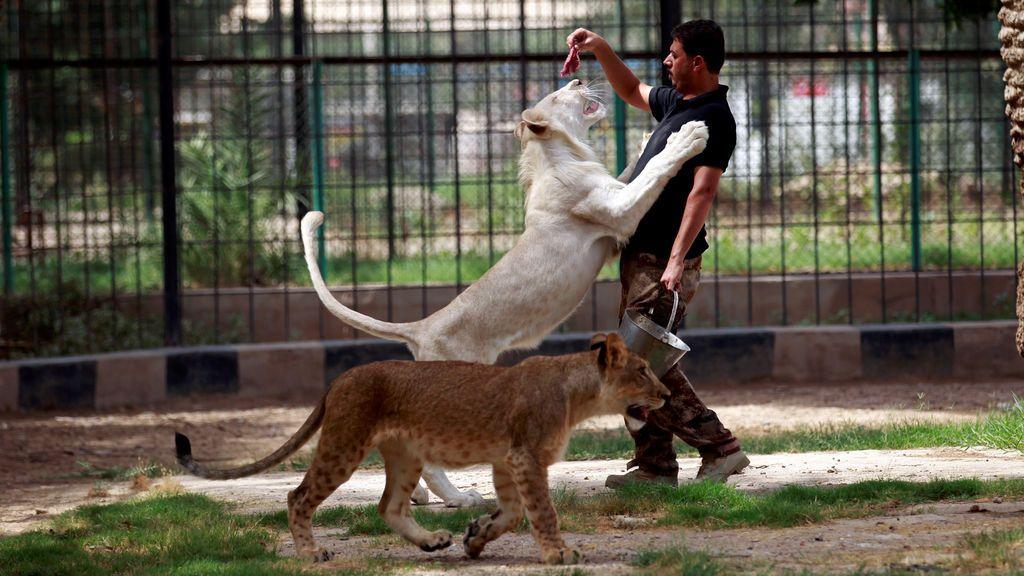 Zoológico de Al Zawra en Bagdad