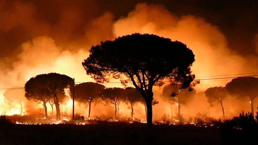 El fuego de Moguer arrasó una superficie de 8.486 hectáreas, el 78 % de la zona afectada
