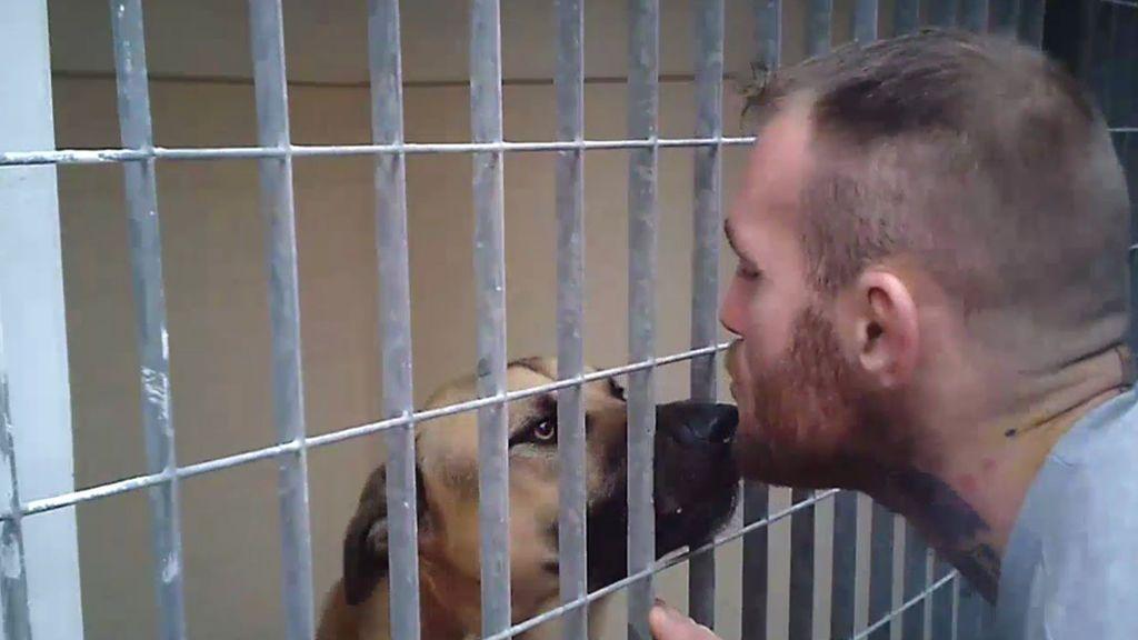 ¿Cuántos perros se sacrifican en CATAD? Cartagena sospecha de las malas prácticas de este refugio de adopción