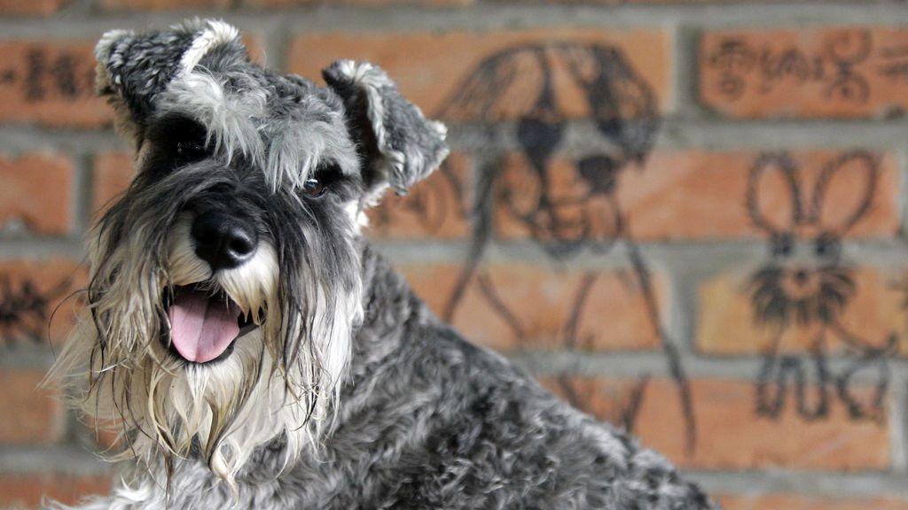 Una pareja de perros desaparecidos vuelve a casa por el olor de su plato favorito