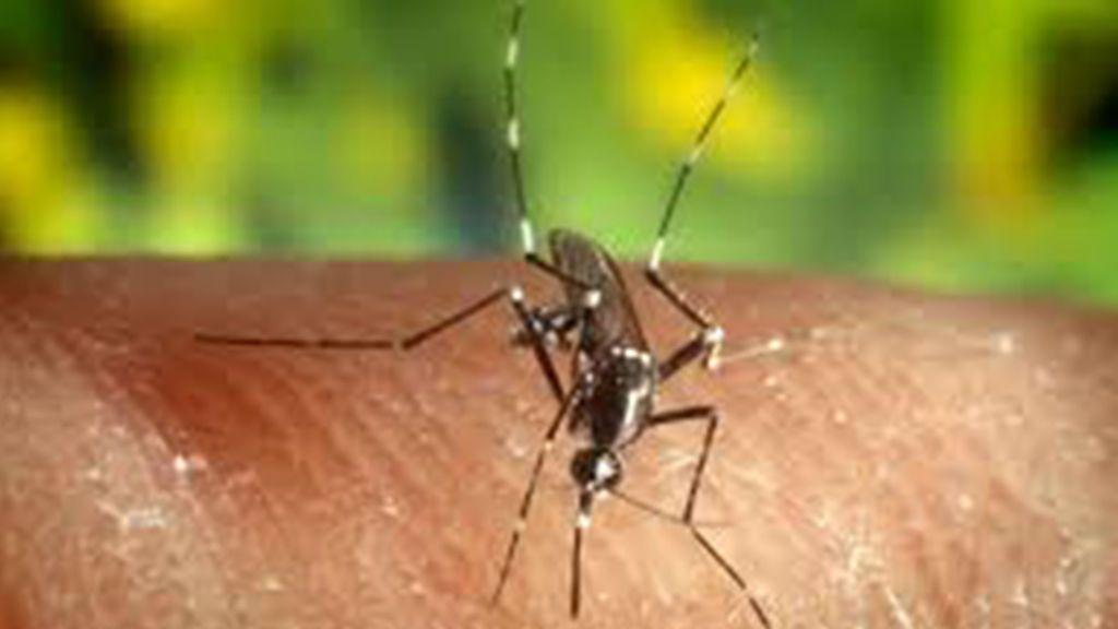 El próximo Zika podría ser el Chikungunya: Síntomas a los que tienes que estar atento