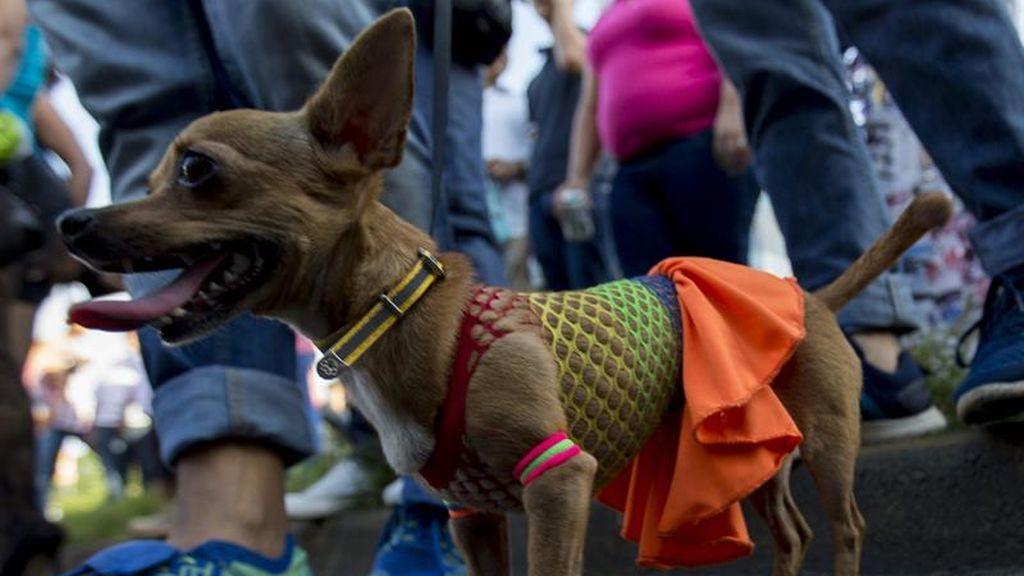 Miles de nincaragüenses participan en marcha del Orgullo Gay en Managua