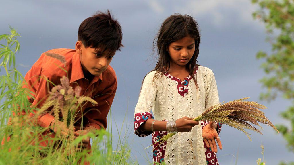 Niños recogiendo flores silvestres en Islamabad, Pakistán