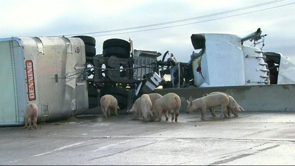 Sorpresa mayúscula en una autopista de Texas