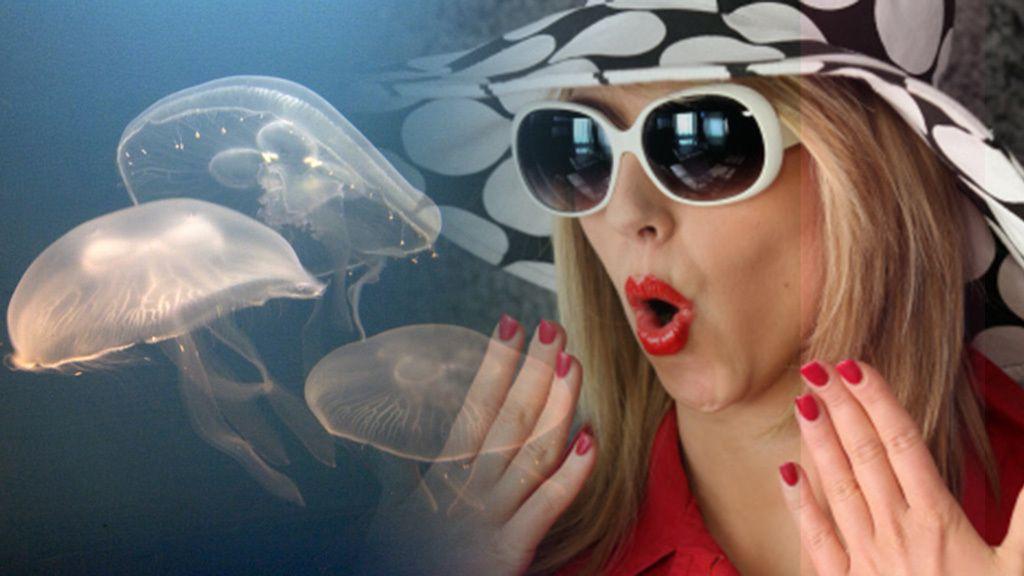 El mayor temor del verano: las medusas